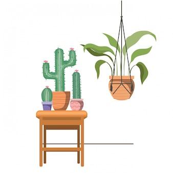 Plantas de casa em cabides de macramê e mesa