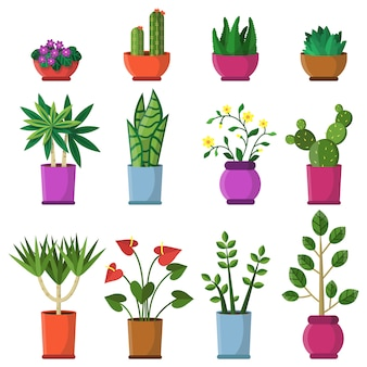 Plantas de casa em vasos.