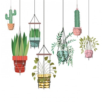 Plantas de casa no ícone de cabides de macramê