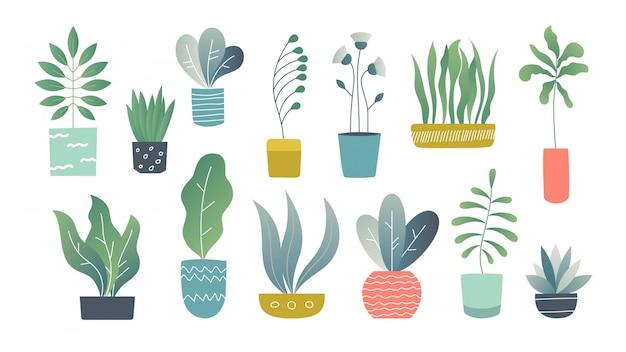 Plantas de casa planas. plantas de jardim interior doodle, suculentas interiores bonitos e plantas de casa. desenhado à mão