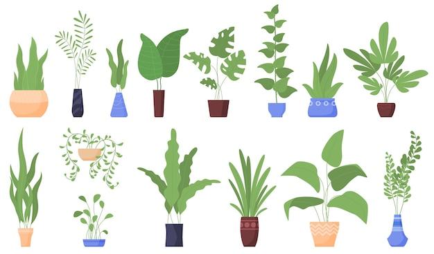 Plantas de casa. vasos de flores.