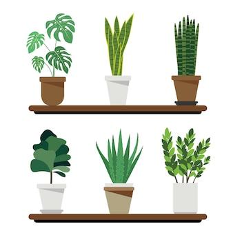 Plantas de filtragem e purificação de ar, incluindo monstera, snakeevents, sansevieria cylindrica, fiddle fig, aloe vera e zanzibar gem zanzibar gem house umidificador para o conceito de saúde.