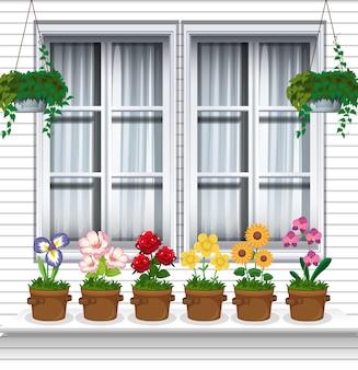 Plantas de flores perto da janela