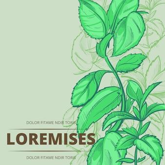 Plantas de hortelã-pimenta e folhas de fundo do cartaz