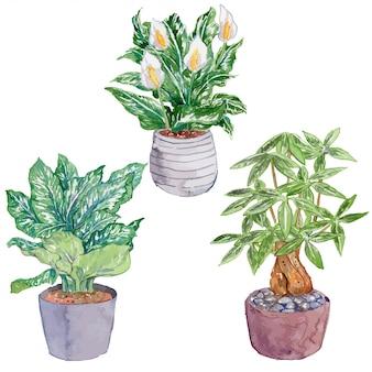 Plantas de interior aquarela set parte 6