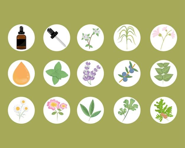 Plantas de óleos essentail