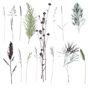 Plantas de vetor e ilustração conjunto de ervas. ilustração em aquarela.