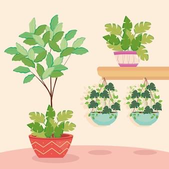 Plantas dentro de vasos pendurados e na prateleira de design floral de jardim de natureza e tema de ornamento.