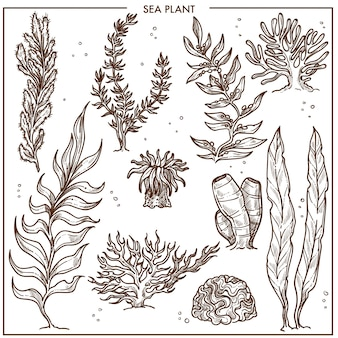 Plantas do mar com hastes longas
