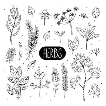 Plantas doodle ilustrações, cliparts, conjunto de elementos. ervas, flores. ingrediente natural, orgânico, cosméticos veganos. adesivo, ícone, ilustração de mão desenhada.