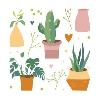 Plantas em casa no conjunto de vaso