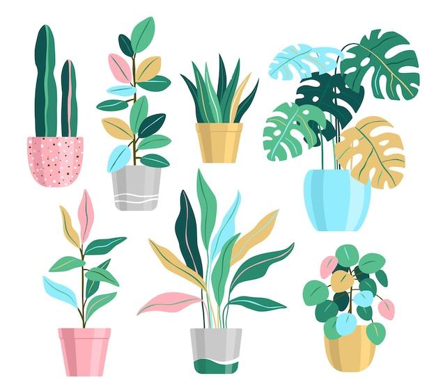 Plantas em vaso, ilustrações vetoriais de plantas caseiras
