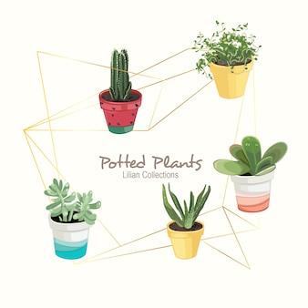 Plantas em vasos coloridos