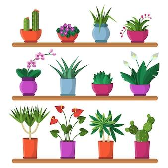 Plantas em vasos nas prateleiras