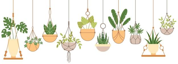 Plantas em vasos pendurados