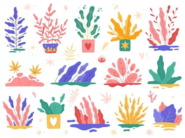 Plantas mínimas, flores da moda no jardim, belas selvas