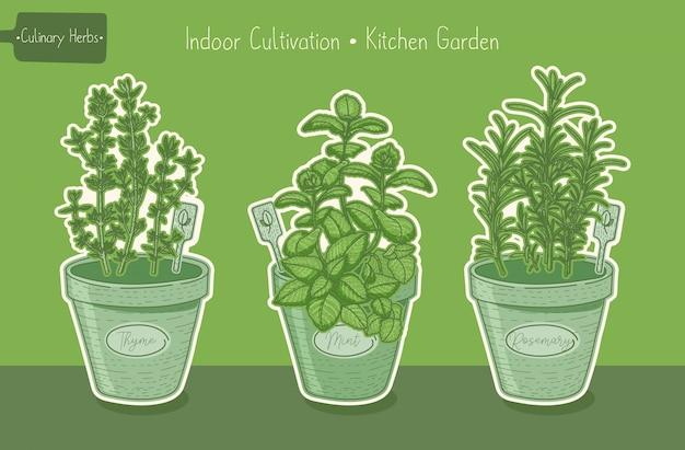 Plantas orgânicas alimentares para horta