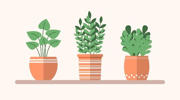 Plantas planas verdes de vetor em vasos na prateleira ilustração interior simples