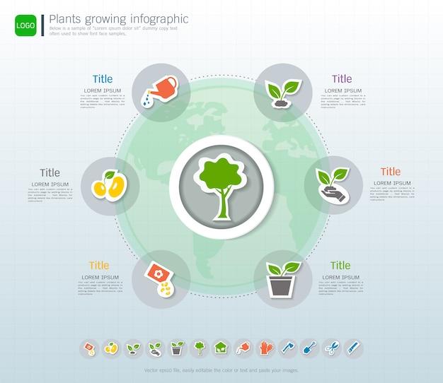 Plantas que crescem cronograma infográfico
