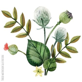 Plantas selvagens mão pintada em aquarela boutonniere