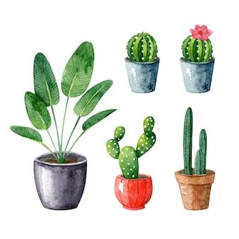 Plantas, suculentas e cactos em vasos. aquarela com interior escandinavo e clipart desenhado