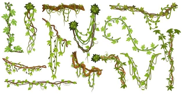 Plantas trepadeiras de cipós da selva, ramos com folhas de videiras da floresta tropical