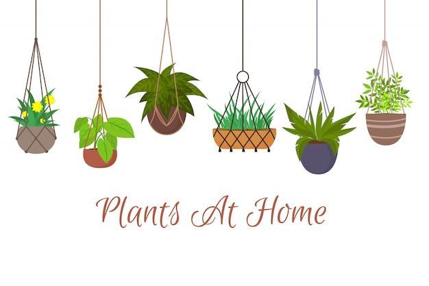 Plantas verdes de interior em vasos pendurados em cabides de macramê decorativos