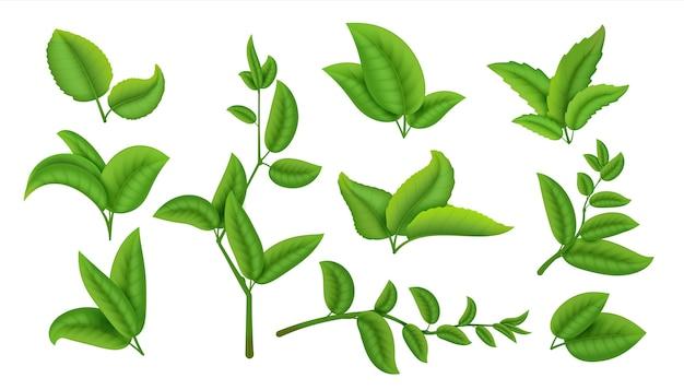 Plantas verdes e ervas isoladas em branco