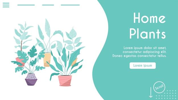 Plantas verdes em vasos definem objetos isolados. árvores de envasamento, vasos de flores pendurados estilo interior. horta doméstica, plantação de flores, planta de casa em design de interiores, vegetação no escritório