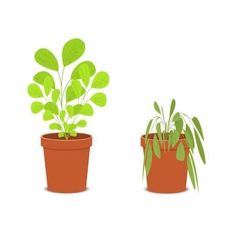 Plante uma flor murcha e murcha nos vasos planta de casa morrendo sem cuidado e regando