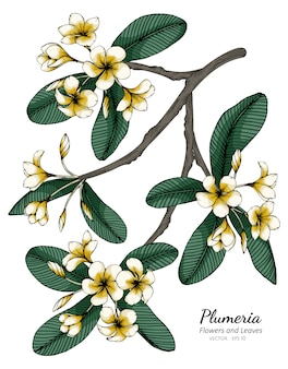 Plumeria flor e folha desenho ilustração