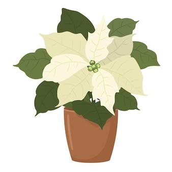 Poinsétia branca em um vaso de flores. ilustração em estilo simples.