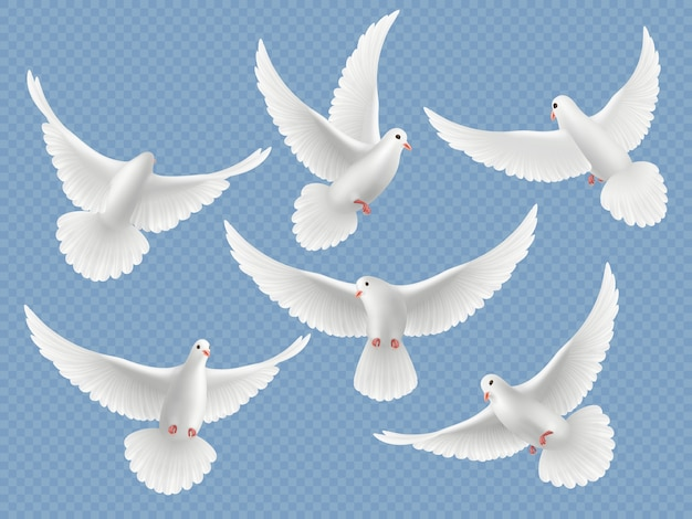 Pombas realistas. branco liberdade pássaros voando pombos religião símbolos coleção de imagens. conjunto de ilustração de liberdade de pombo e pomba branca
