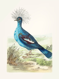 Pombo coroado desenhado de mão