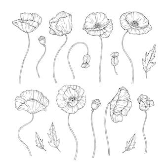 Poppy. esboçar papoilas ornamento decoração arte da parede planta decorativa papoila flor em botão plantar papel de parede bela tatuagem