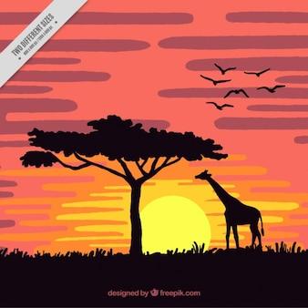 Pôr do sol na savana com uma girafa