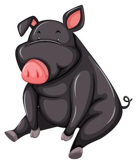 Porco cinzento e gordo