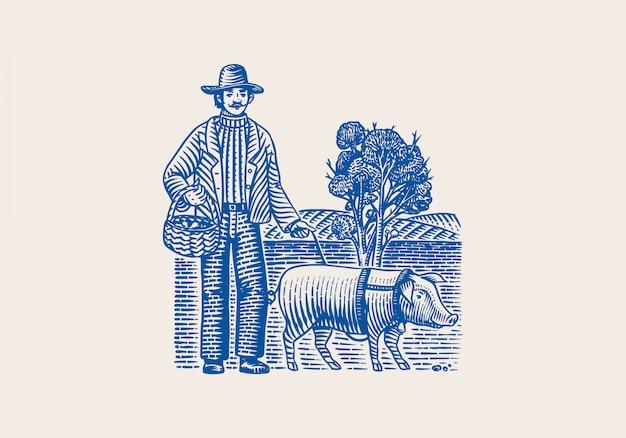 Porco e fazendeiro por localizar cogumelos trufas. porco doméstico. esboço vintage desenhado mão gravada. estilo xilogravura. ilustração.