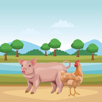Porco e galinha