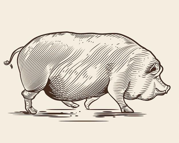 Porco no estilo de uma gravura.