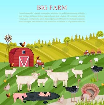 Porcos caprinos e animais de galinha na fazenda