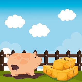 Porcos na cena da fazenda