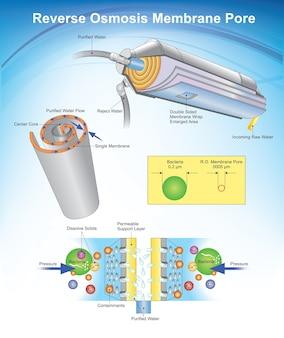 Poros da membrana da osmose reversa