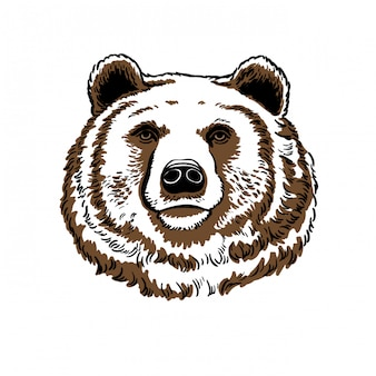 Portrite urso, ilustração.