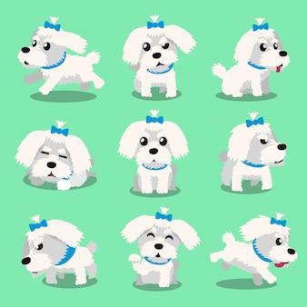 Poses de cão maltês de personagem de desenho animado