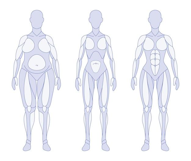 Posição frontal da anatomia dos tipos de corpo feminino