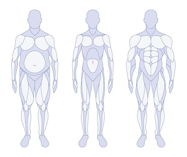 Posição frontal da anatomia dos tipos de corpo masculino
