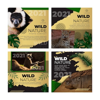 Postagens de instagram de natureza selvagem