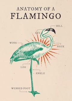 Pôster de anatomia do flamingo Vetor grátis