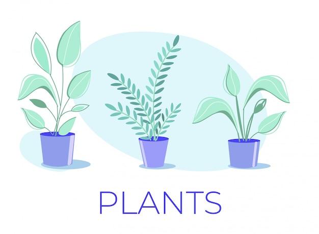 Poster dos desenhos animados com a coleção de plantas de casa em vaso